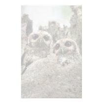The Bare-legged Owl Or Cuban Screech Owl Stationery