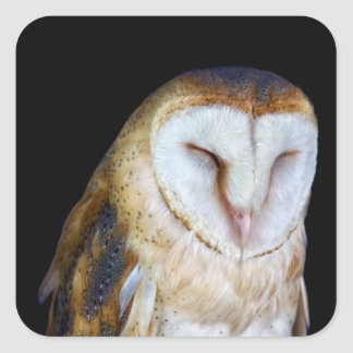The Barn Owl Square Sticker