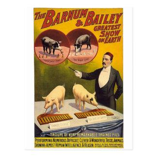 The Barnum & Bailey greatest show on earth--Troupe Postcard