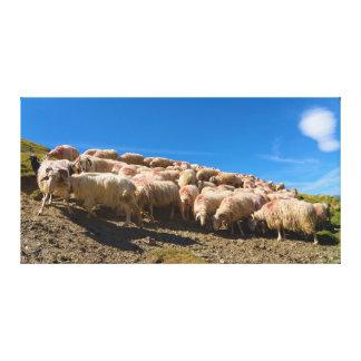 The Basque-Béarnaise or Basque Sheep Herd Canvas Print