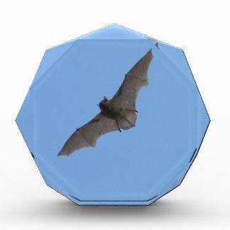 The bat award