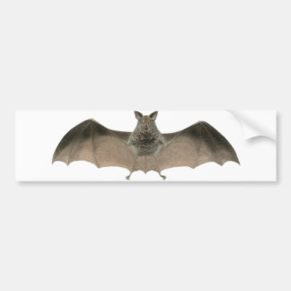 the bat bumper sticker