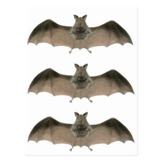the bat postcard
