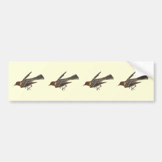 The Bay-breasted Warbler (Sylvicola castanea) Bumper Sticker