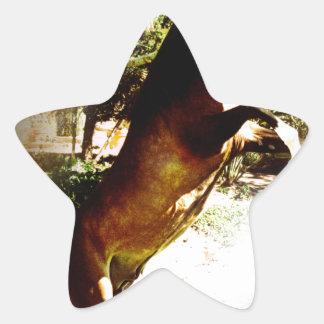 The Bay Colt Star Sticker