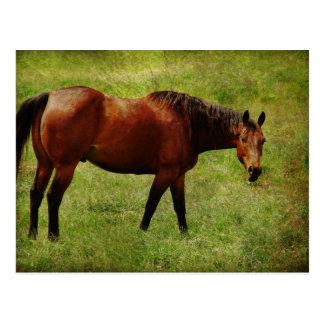 The Bay Horse Postcard
