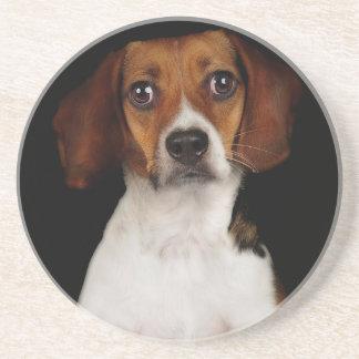 The Beagle Coaster