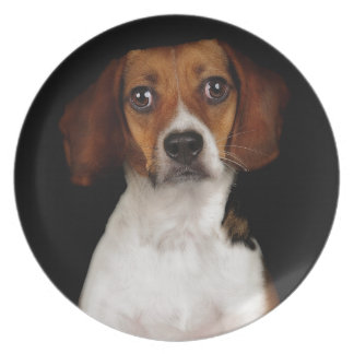 The Beagle Dinner Plate
