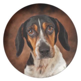 The Beagle Mix Plate