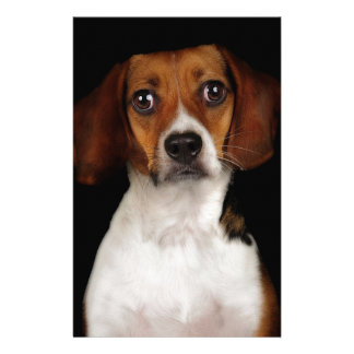 The Beagle Personalized Stationery