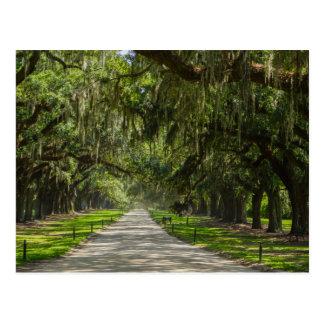 The Beautiful Avenue Of Oaks Postcard