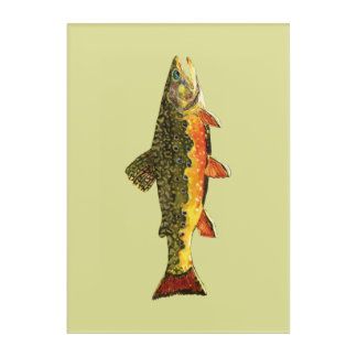 The Beautiful Brook Trout Acrylic Print