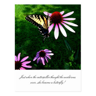 The beautiful butterfly postcard
