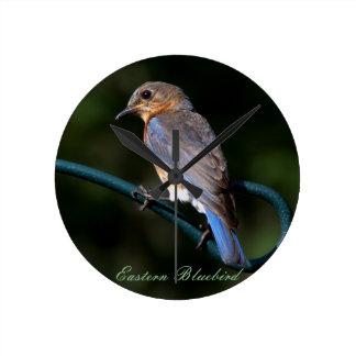 The Beautiful Eastern Bluebird Round Clock