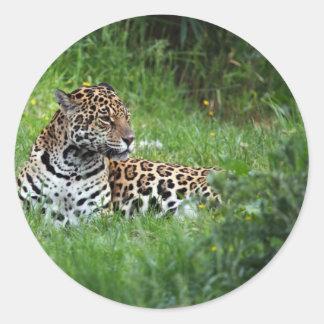 The Beautiful Jaguar Round Sticker