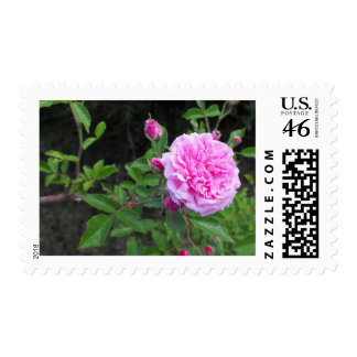 The Beauty of a Flower Stamp