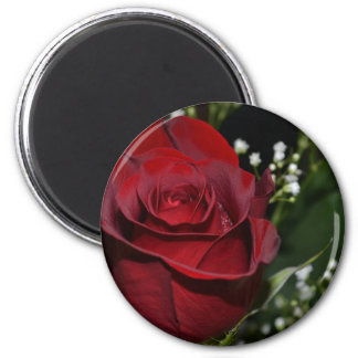 The Beauty of a Red Rose Refrigerator Magnets