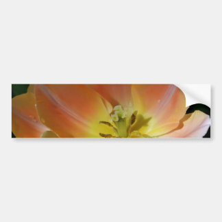 The Beauty of an Opened Tulip Bumper Sticker