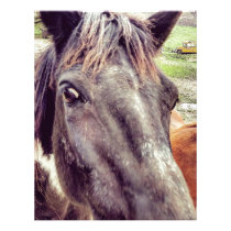 The Beauty of the Horse Letterhead