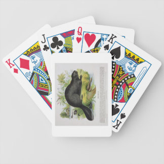 The Beaver, educational illustration pub. by the S Bicycle Playing Cards