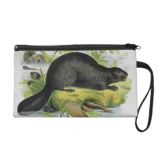 The Beaver, educational illustration pub. by the S Wristlet Purse