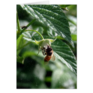 The Bee on the Raspberry Bush Card