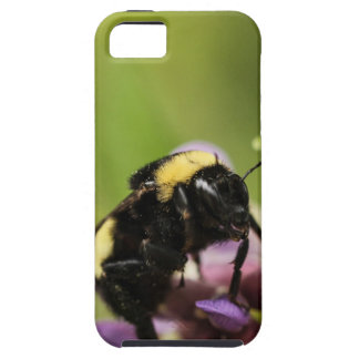 The Bee's Knees iPhone 5 Cover