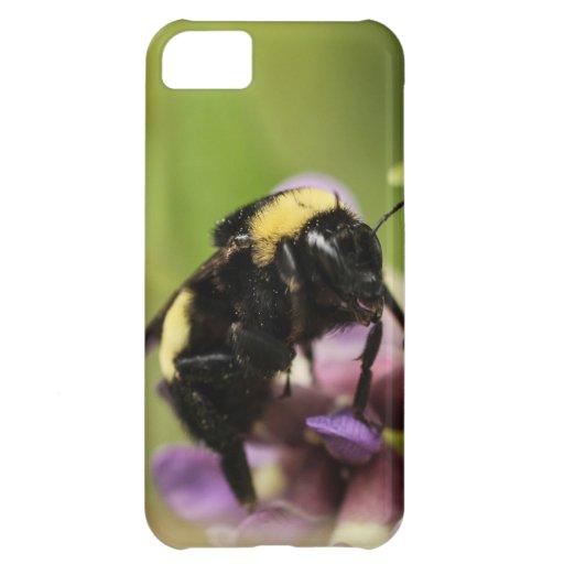 The Bee's Knees iPhone 5C Cases