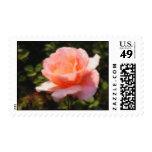 The Belami Rose Stamp