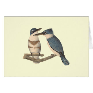The Belted Kingfisher (Alcedo alcyon) Card