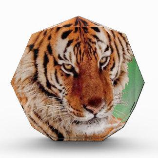 The Bengal Tiger Acrylic Award