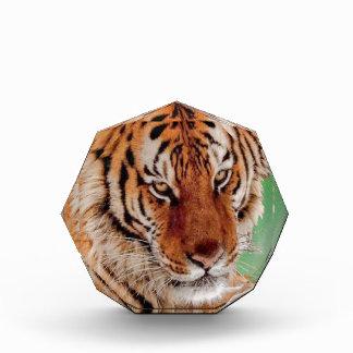 The Bengal Tiger Award