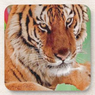 The Bengal Tiger Coaster