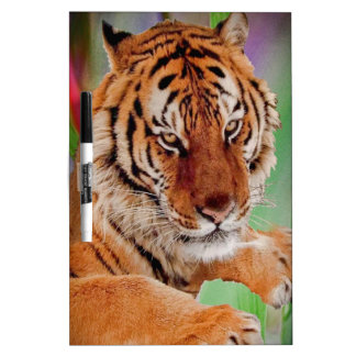 The Bengal Tiger Dry Erase Whiteboard