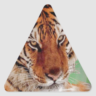 The Bengal Tiger Triangle Sticker