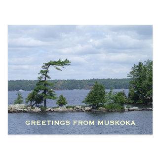 The Bent Tree, Muskoka, Ontario, Canada Postcards