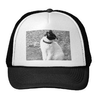 the best art work 20,152,016 trucker hat