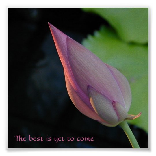 The best is yet to come - lotus poster