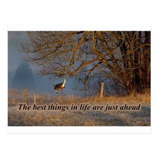 The Best things in Life are just ahead Postcard