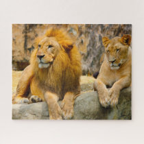 The Big Cats Lions. Jigsaw Puzzle
