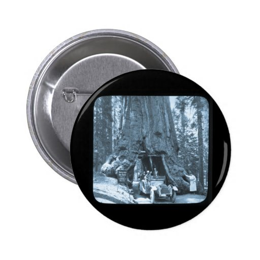 The Big Trees of Mariposa Grove 2 Inch Round Button