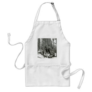 The Big Trees of Mariposa Grove Aprons