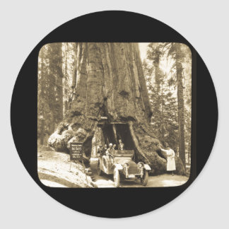 The Big Trees of Mariposa Grove Stickers
