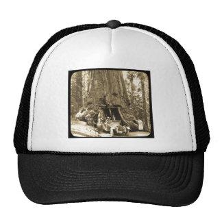 The Big Trees of Mariposa Grove Trucker Hat