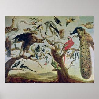 The Bird's Concert Poster