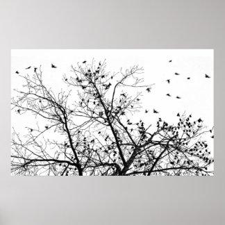 the black birds poster