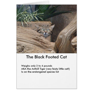 The Black Footed Cat Card