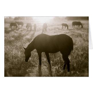 The Black Hills Wild Horse Sanctuary Notecard