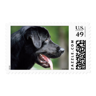 The Black Labrador Postage