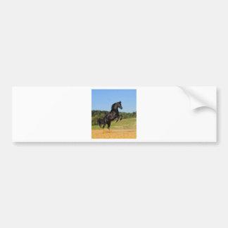 The Black Stallion Bumper Sticker